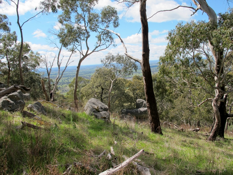 Mount Alexander: its granite ridges were once covered with a variety of trees, especially Banksias and Casuarinas.