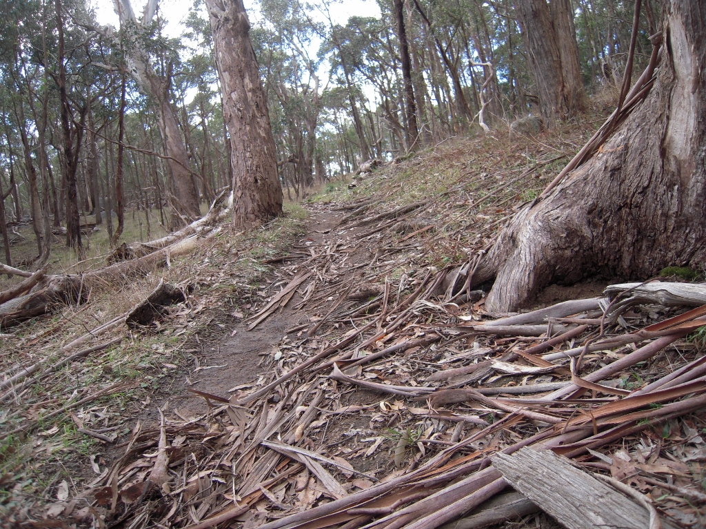 Mount Alexander, west side: illegal mountain bike use on these slopes could cause serious erosion problems