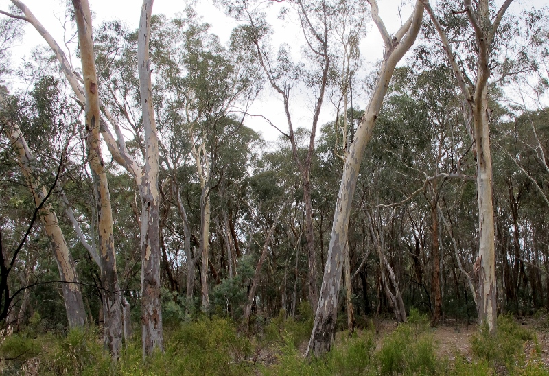 Bushland near proposed Gowar hot rod centre: the question is, how much effect will the proposed development have on wildlife in the State Forest and Nature Conservation Reserve?  And how will it affect the enjoyment of users of this bushland?