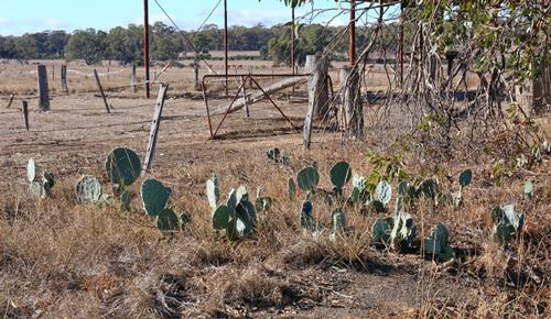 wheel-cactus