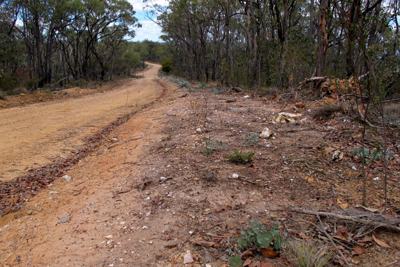 Fryers Ridge Road, February 2016: the grey foliage is Long Leaved Box regrowth. Last year's roadside scalping has obliterated harmless groundcovers, but has led to proliferation of eucalypts which are likely to obscure sightlines within a few years. Better ways of controlling vegetation are available--and recommended.