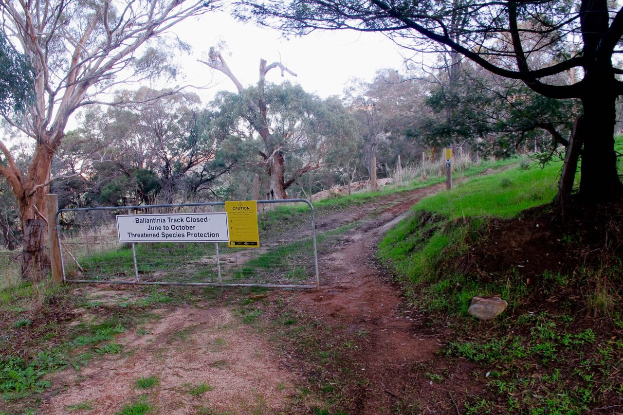 Northern gate to the Ballantinia Track, Mount Alexander, June 2016: when does a gate not actually function as a gate? When it never shuts properly.