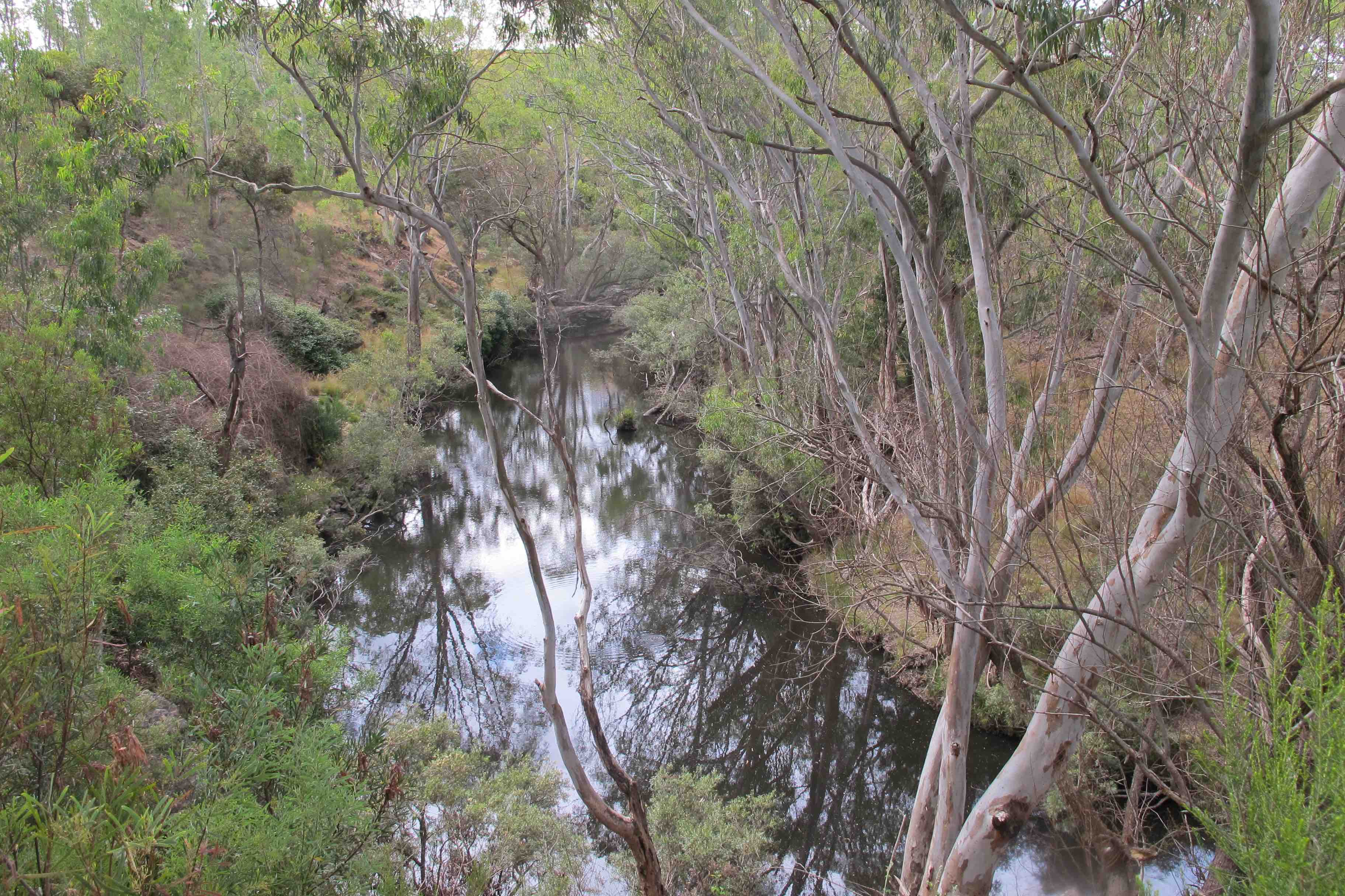 The Loddon near Vaughan: a precious place, in need of protection from fire.