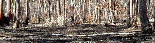 burnt-landscape-near-maldon
