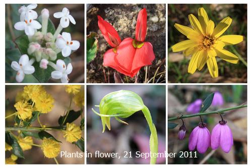fobif-text-flowers