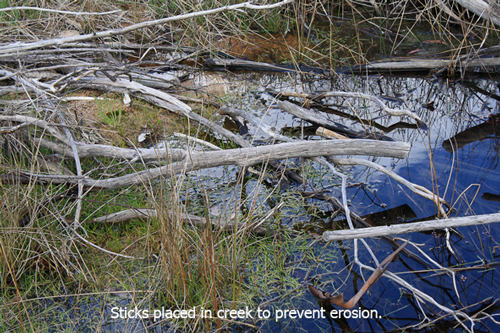 web-sticks-in-creek-1