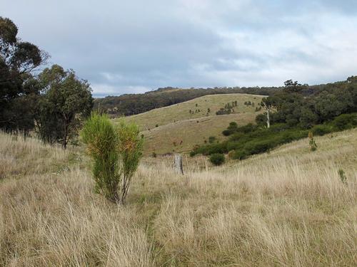 Undulating Pastures