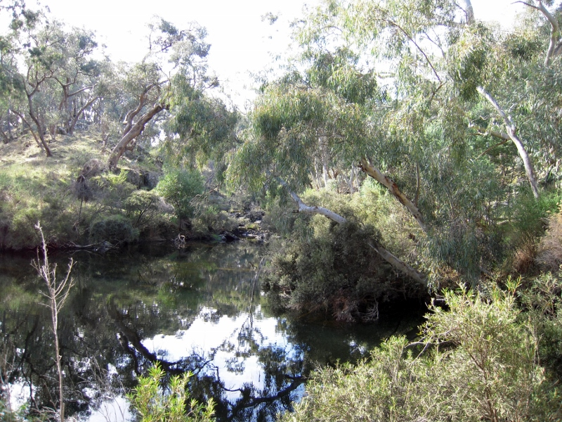 Upper Loddon: this stretch of river is one of the few healthy ones in our region: in North Central and NW Victoria less than ten per cent of streams are in 'good or excellent condition.' The State Government is allocating half as much money to river health as it is to the Grand Prix.