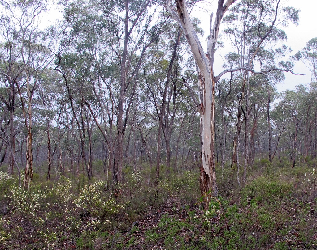 In the Maldon Historic Reserve: DEPI says that proposed development nearby would inevitably require severe fuel reduction in the reserve, with inevitable damage to forest structure. The Department adds that 'it is not appropriate to manage risk created on private land using Crown land for defendable space.'