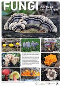 web-fungi-poster