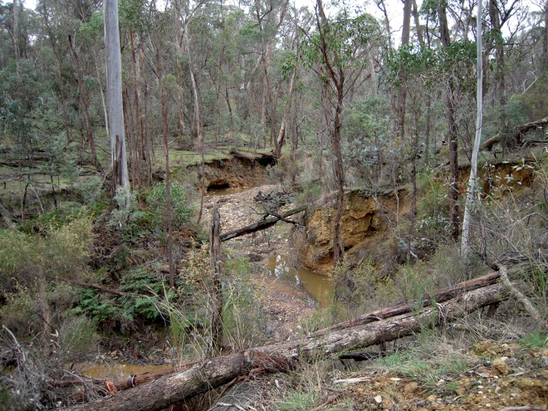 Sebastopol Creek, in the Castlemaine Diggings NHP: ruined waterways on the slow path to recovery are a dramatic historic reality.