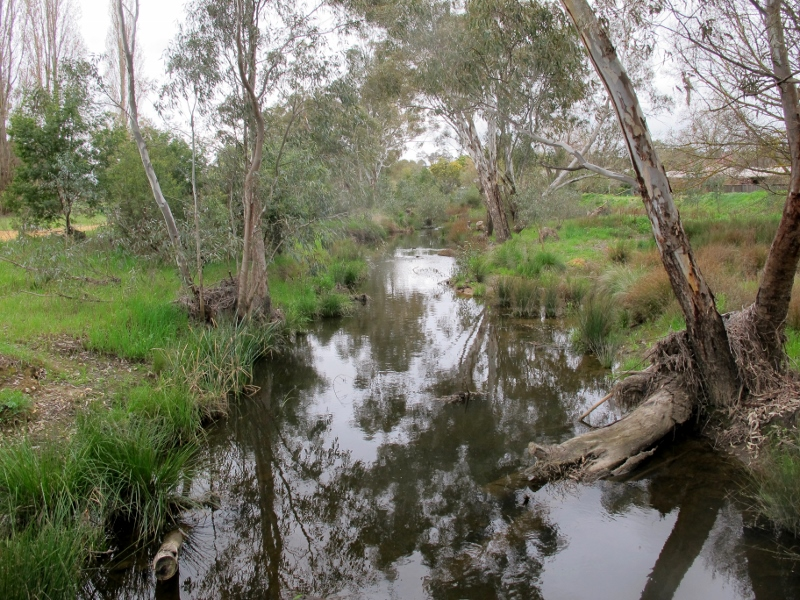 Campbells Creek from the footbridge: many years of work by the Friends group have brought a remarkable revival.
