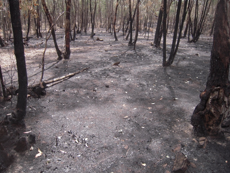 Muckleford Demo track, November 2011: even if risk analysis showed that the burning program wasn't making us safer, the Government would still be committed to it.