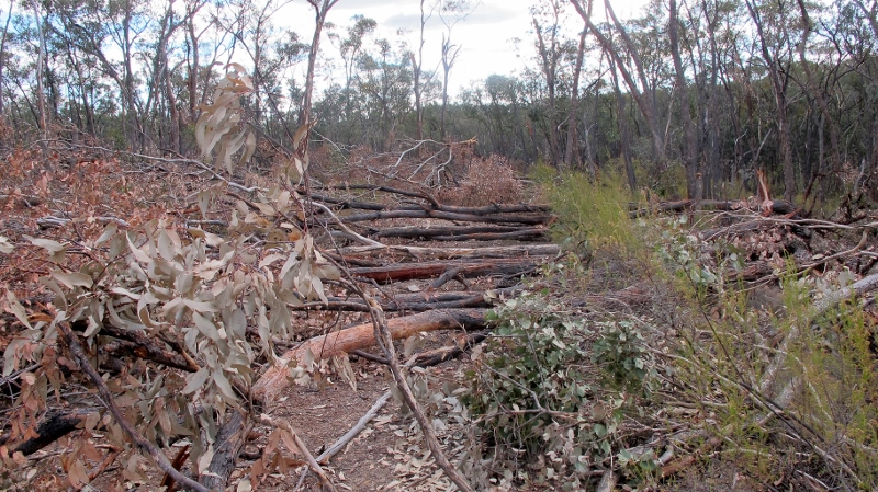 Crocodile Reservoir Track,  March 2015: Trees big and small tossed almost neatly across the road.