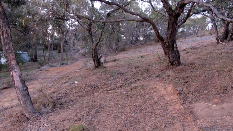 Groomed area near Bull Street: the removal of vegetation is part of a package of fire management actions.
