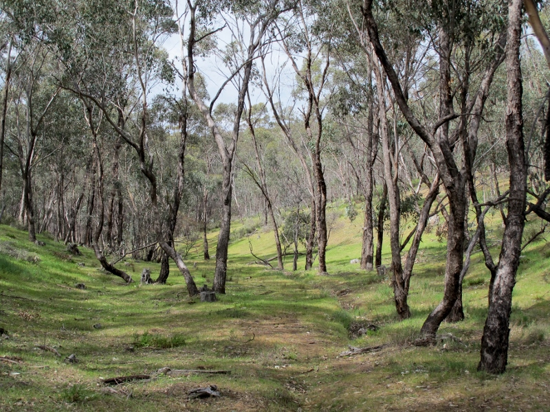 In the Gough's Range State Forest: FOBIF is taking a close interest in large scale burns planned for this and other remoter areas.