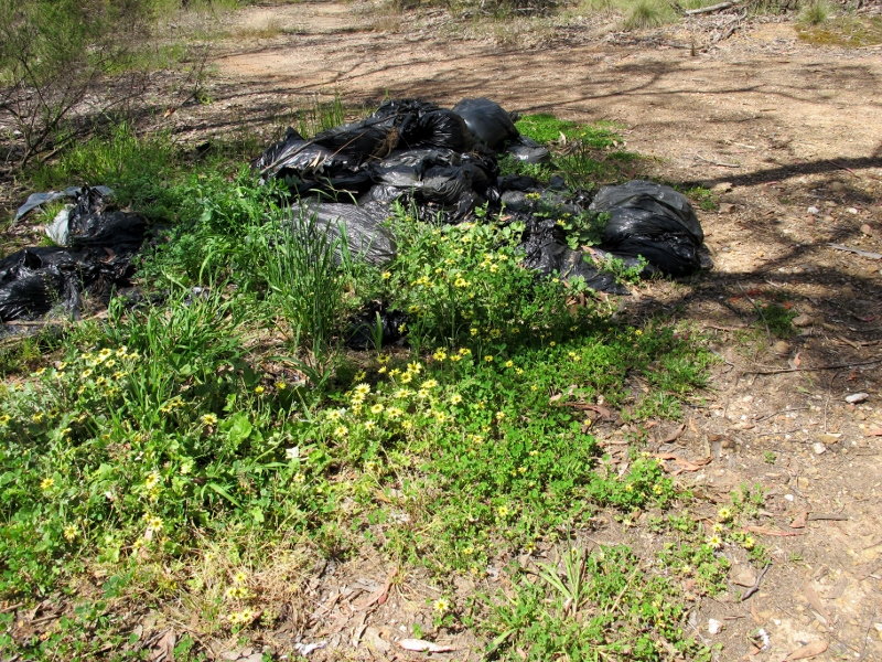 Green waste dumped near Morgan's Track: green rubbish is potentially more harmful than other types because of its capacity to spread. We suggest that Council should check out ways of reducing this problem.