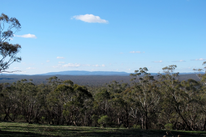 Looking east across the Muckleford forest to Mount Alexander, from Gough's Range.