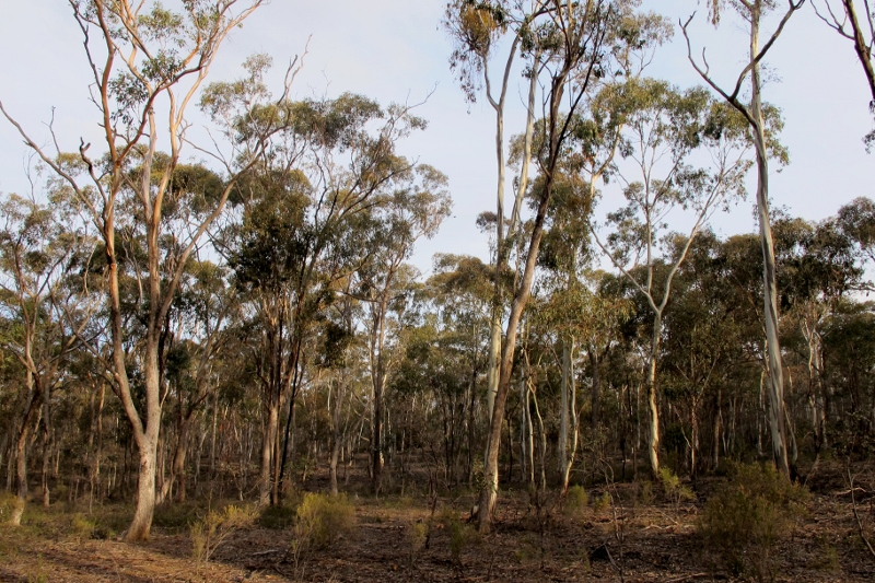 Sandon State Forest: the 491 ha management fire in this zone has been deleted from the fire operations plan.