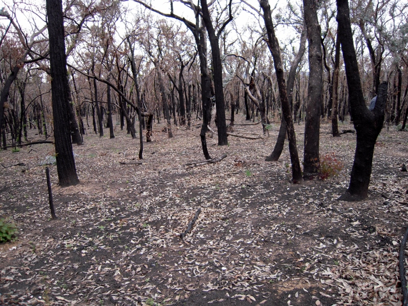Severe management burn: a Melbourne University study has shown that such an exercise, repeated at 3 year intervals, causes severe soil damage.