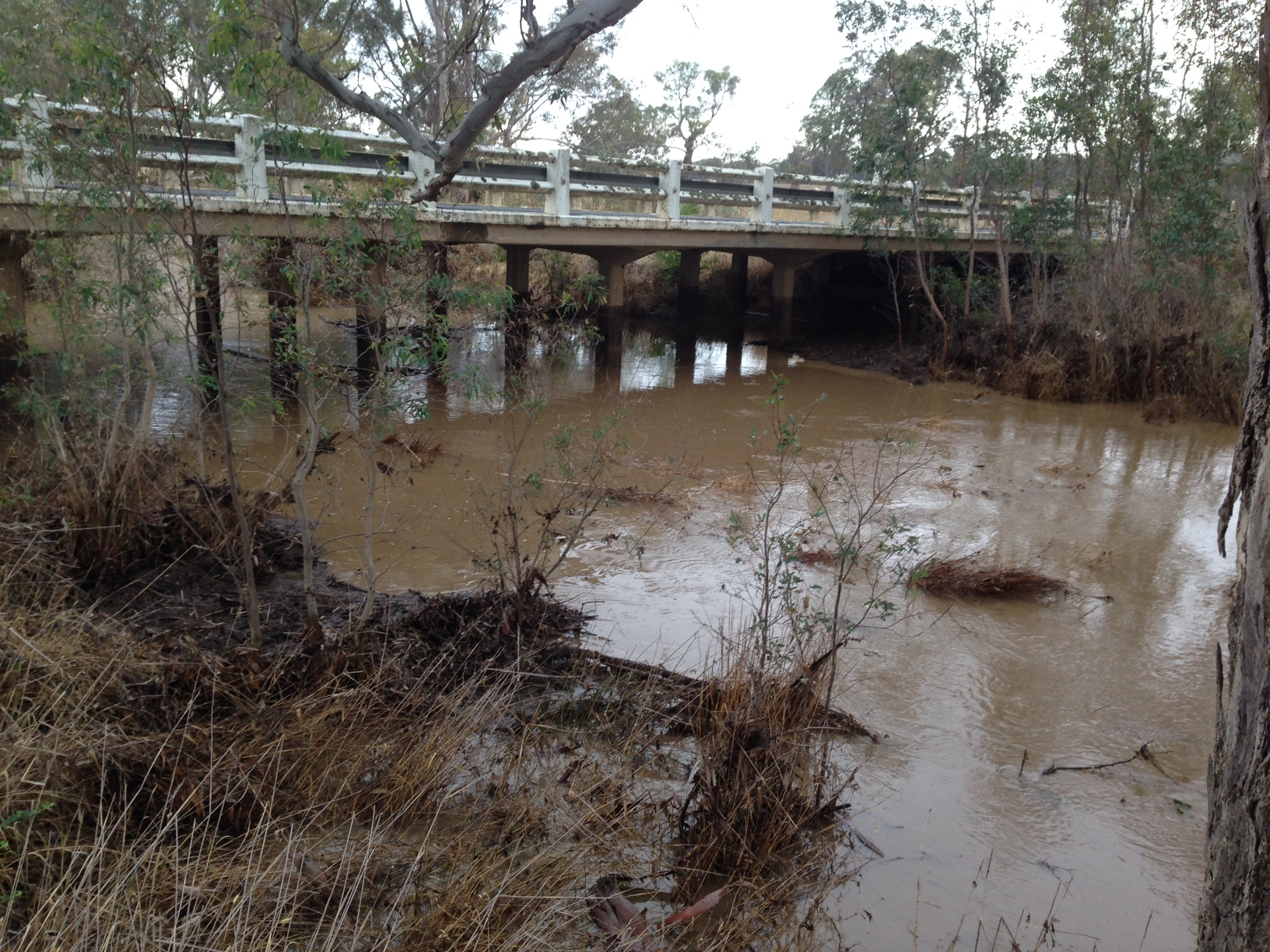 Muckleford Creek at the Pyrenees Highway last Thursday. The creek was off its peak when Alex Wiggenraad took this photo. Parts of the shire got a heavy dump, others barely a drop: but the overall figures for the last 12 months [and the last 16 years] are dismal.