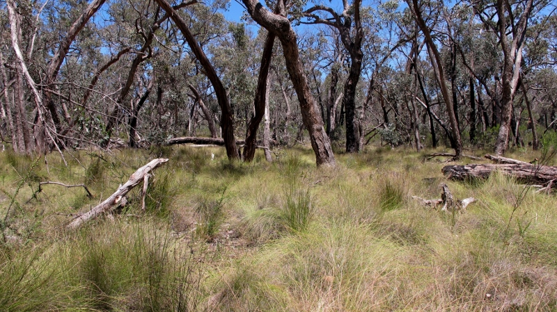 Near Porcupine Ridge, in a new fire zone proposed under the risk management system. DELWP is rethinking its fuel reduction strategy, and info on the new system will be available at a public consultation in Castlemaine on Thursday.