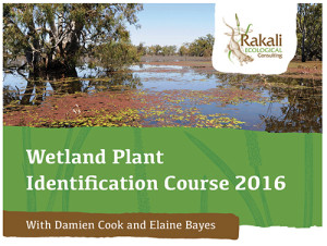 wetland plant id course